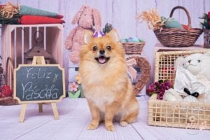 Ensaios de Páscoa para Pets